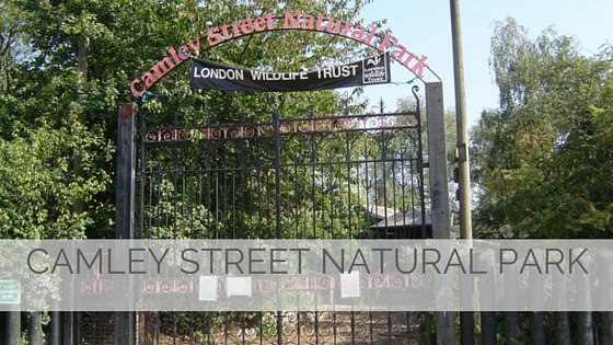 Camley Street Natural Park